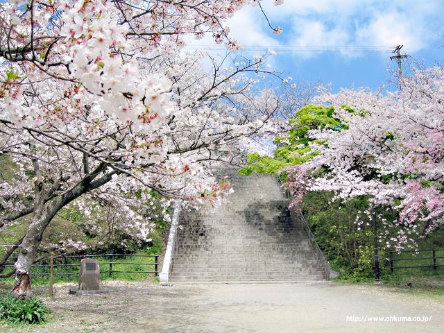 目の前にある大きな公園。春には1800本の桜が満開となる名スポット。花見の時期には出店なども出ます。